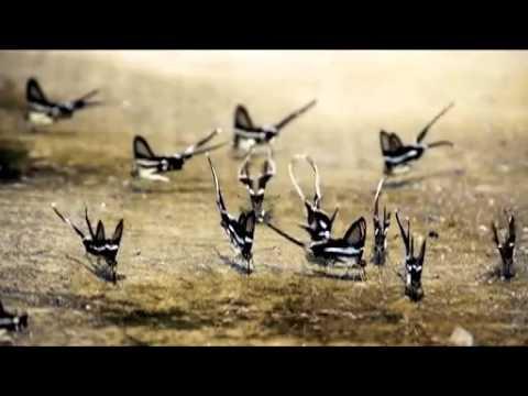 ベトナムの蝶の群れ