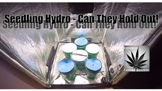 Will a seedling survive in a hydroponic setup?