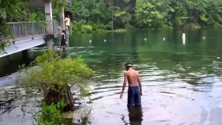 Florida Panhandle - Wakulla Springs State Park