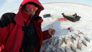Рыбалка в рубцовском районе алтайского края