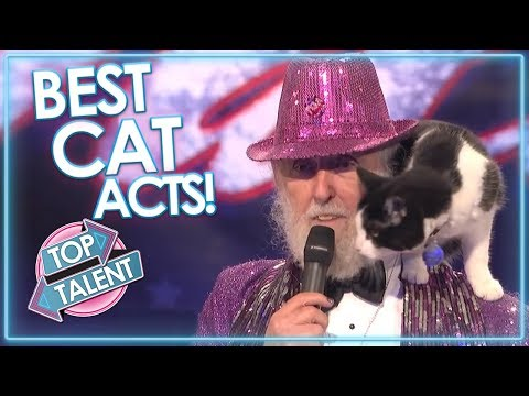 ALL CAT ACTS On X Factor, Got Talent and Idols! | Top Talent (видео)