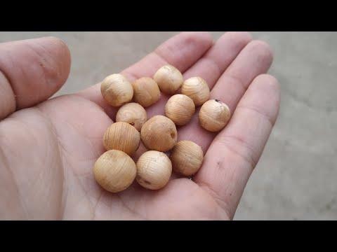 Как сделать круглые шарики из дерева?