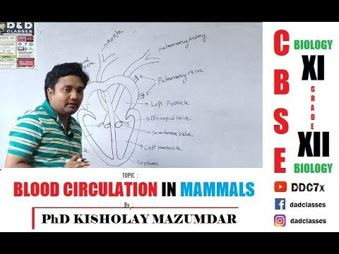 CBSE XI BLOOD CIRCULATION BY PhD KISHOLAY MAZUMDAR