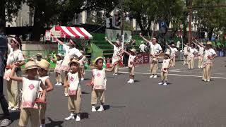 mqdefault - 認定こども園みかづき幼稚園 第66回よさこい祭り