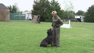 The Foundations Of Competitive Working Dogs Obedience 3v1- Heeling, The Recall And Motion Exercises