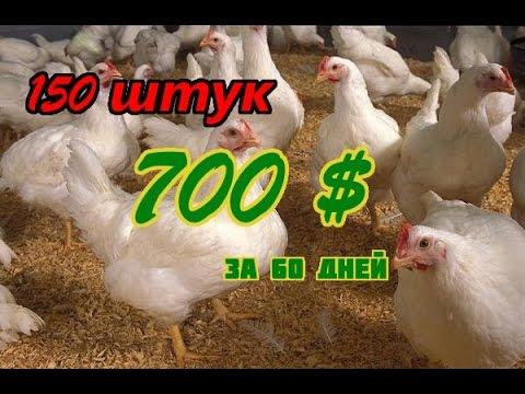 Выращивание бройлеров. 150 шт, 700 $ за 60 дней.