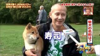 海外での柴犬人気