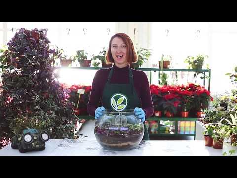 Композиция из комнатных растений: хлорофитум, циссус, традесканция, плющ, мюленбекия