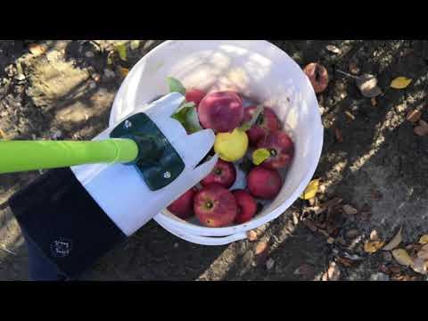 Самодельный плодосборник для яблок за 3 копейки .