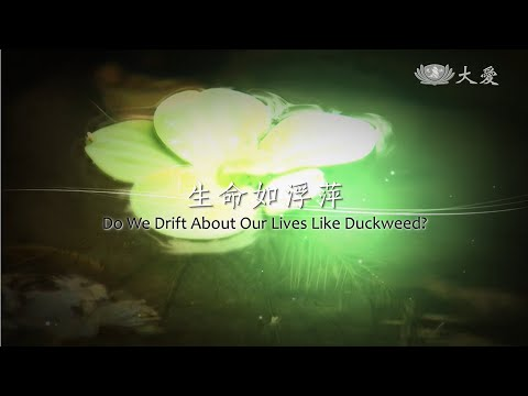 Do We Drift About Our Lives Like Duckweed?