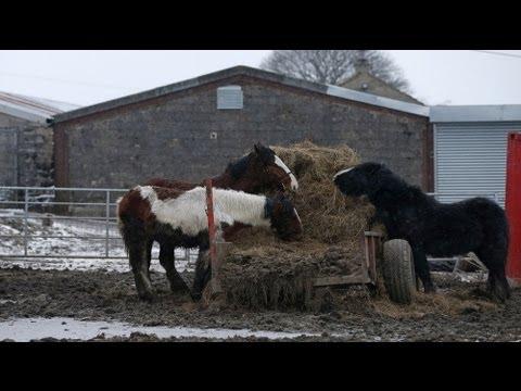 Comprare lattivatore di cavallo in Kirov