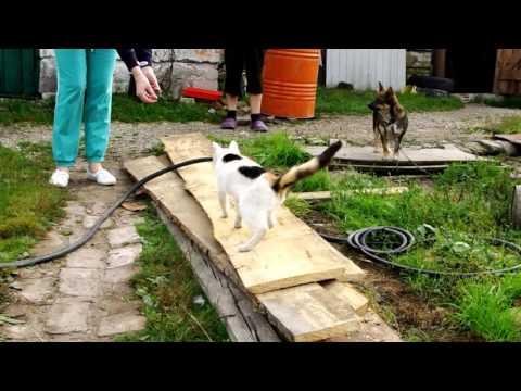 Кошке требуется лечение и передержка!