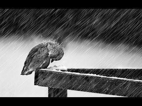 Rain sound relax 3 hours Suono pioggia rilassante 3 ore Temporale Suoni della natura 雨 ASMR