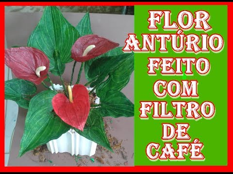Flores Anturio