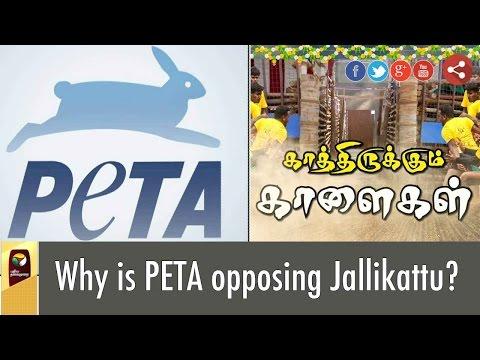 Why-is-PETA-opposing-Jallikattu