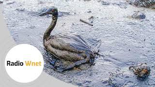 Morze Czerwone zagrożone! Jastrzębski: Na pokładzie Safera znajduje się milion baryłek ropy naftowej