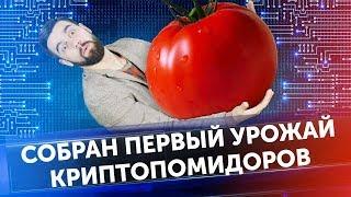 Новости криптовалют 2018: Виталий Бутерин, криптопомидоры и запрет майнинга?