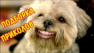 Смешные видео моменты Приколы Фейлы / Лучшая подборка приколов #6