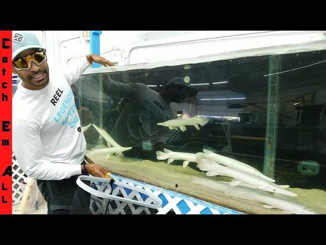 My First PLATINUM AQUARIUM FISH! $3,000!