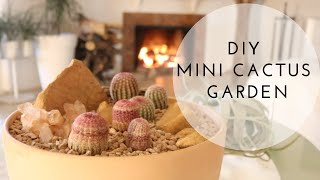 DIY Mini Cactus Garden   Arizona Rainbow Cactus