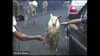 São Paulo 1997 - Simba Safari - Republica - Paulista - parte 2