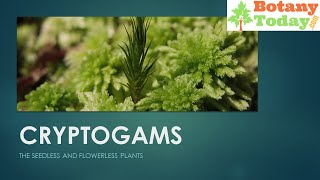 Kryptogamic Garden Bedeutung in Hindi
