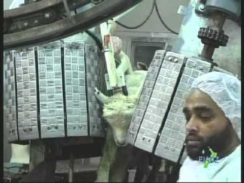 FIANZ Halal Certification Documentary - Full Version - YouTube