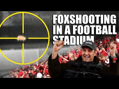 Foxshooting in a Football Stadium