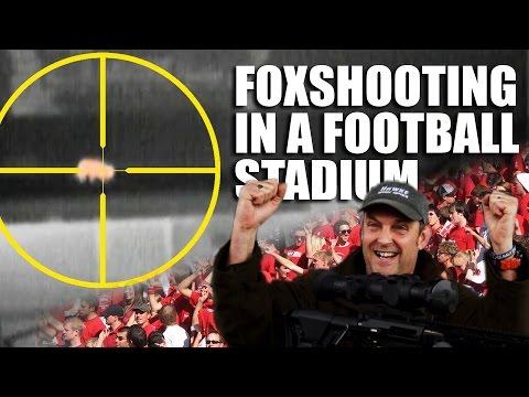 Foxshooting in a Football Stadium