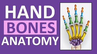 Hand Bones & Wrist Bones (Phalanges, Carpals, Metacarpals): Anatomy and Physiology