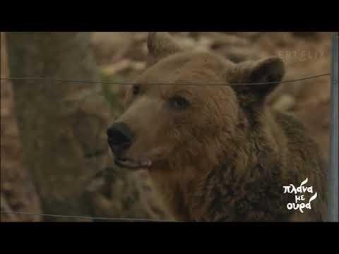 Αρκούδες: Το σπουδαίο έργο του Αρκτούρου στη Φλώρινα | 12/12/2020 | ΕΡΤ