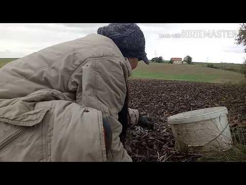 เชื้อโรคหญิงใน Sevastopol