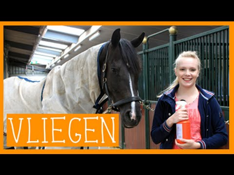 Vliegenspray maken | PaardenpraatTV