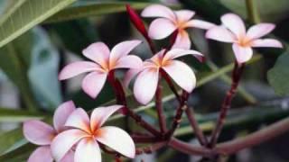JiYa DhAdAk DhAdAk - KaLyUg (WiTh LyRiCs) - YouTube