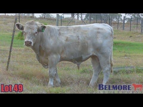 BELMORE TREMAIN Q346