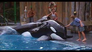 小男孩驯服了一只虎鲸,与它成了好朋友,并帮助虎鲸逃回大海