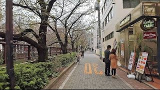 Nakameguro to Shibuya on foot - Long Take【東京・中目黒/渋谷】 4K