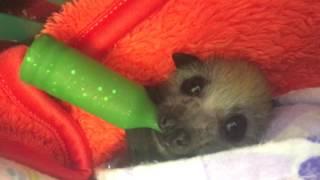 Blinking baby bat:  This is Juniper
