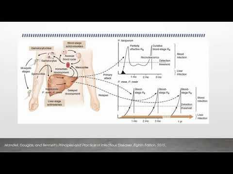 Papiloame și condiloame pe corpul cauzei