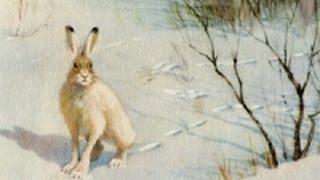 Охота на зайца! Неожиданно повезло!!!/Hunt for hare !Suddenly lucky !!!