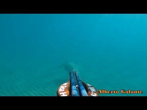 Pesca estrema con Green robsony una serie 1