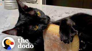 Cat goes WILD for Trader Joe's ciabatta! | The Dodo Cat Crazy