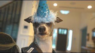 kermit's 8th birthday