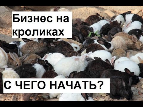 , title : 'Разведение кроликов как бизнес. Как начать бизнес на кроликах