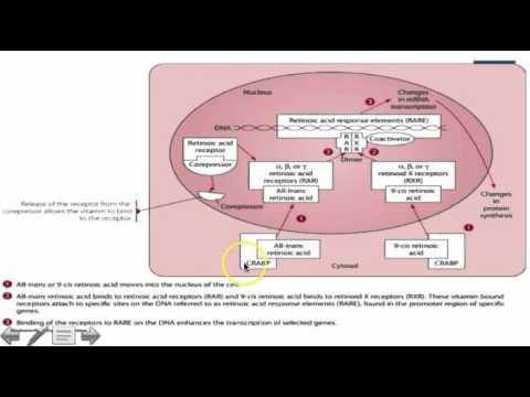 Le sorbier noir du psoriasis