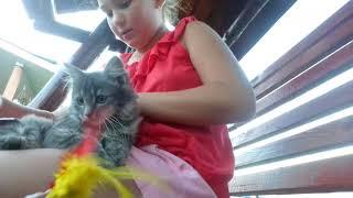 Perii pisica
