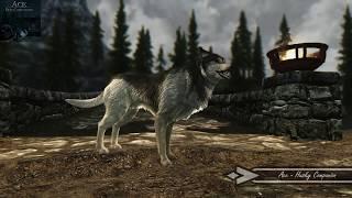 Skyrim Mod Showcase: Ace - Dog Companion