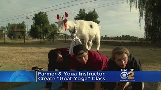 Arizona Goat Yoga CBS New York