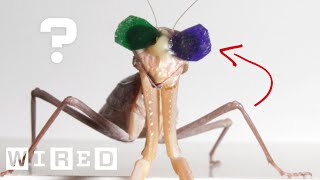 Why Are Praying Mantises Wearing 3D Glasses? | WIRED