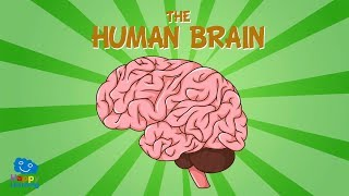 The Human Brain | Educational Videos For Kids
